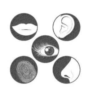 Mémoire d la formation en hypnose Ericksonienne à Toulouse avec Amer Safieddine